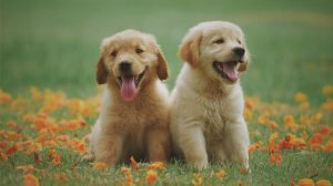 Nomi maschili per cani: ardua scelta o sintonia immediata?
