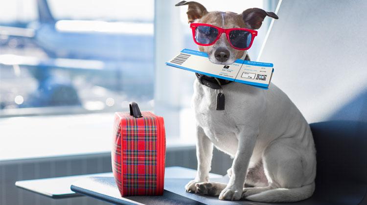 Passaporto per il cane: tutte le informazioni che hai bisogno
