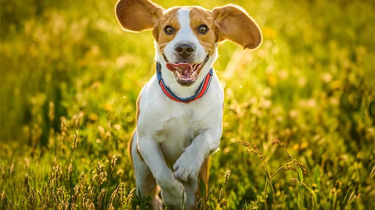 Forasacchi cani: il nemico infiltrato