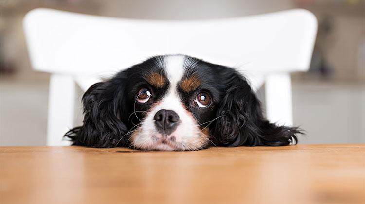 Nomi femminili per cani: quale scegliere?