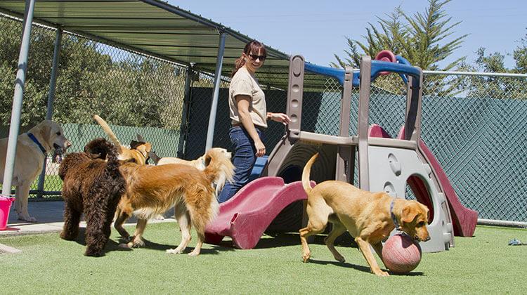 Pensione per cani: da dove iniziare