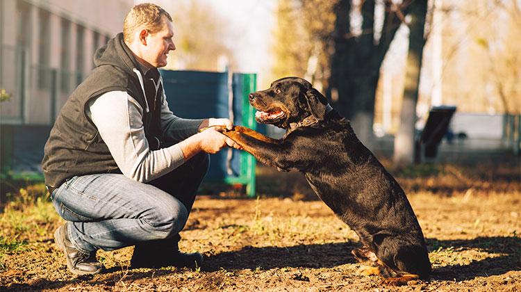Addestrare un cane: un legame emotivo senza precedenti