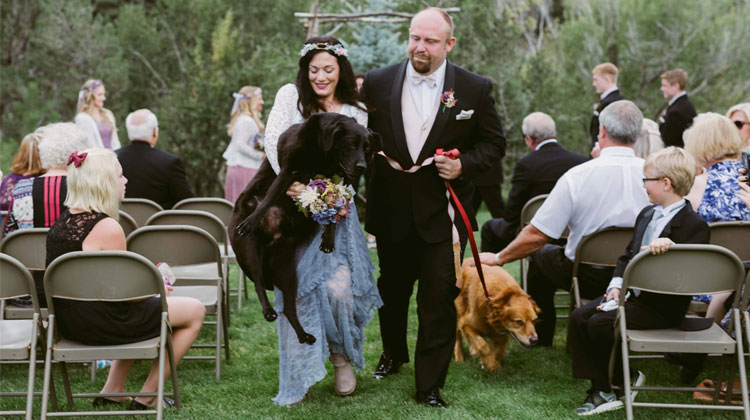 Cani al matrimonio: Charlie accompagna in fin di vita la sua padrona all'altare