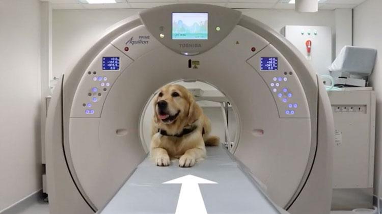 Cani che aiutano i bambini a non avere paura della TAC