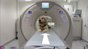 Cani e bambini: come i cani aiutano a non aver paura della TAC e non solo!
