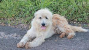 """Cani ritrovati: la storia di Leo che ci ha insegnato cosa significhi """"aspettare"""""""