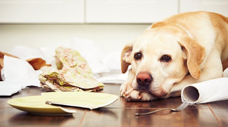 Igiene in casa: cosa fare con un cane in casa