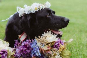 Il cane Charlie al matrimonio dei propri padroni