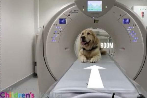Leo Golden Retriever Pet Therapy