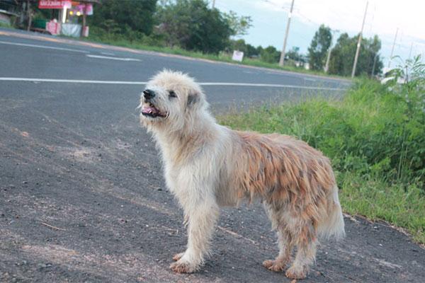 Leo il cane che ha atteso i padroni per quattro anni