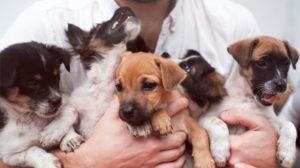 Razze di cani: quante ne esistono e quali sono