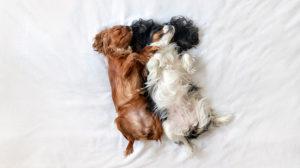 Avere un cane in casa: come comportarsi