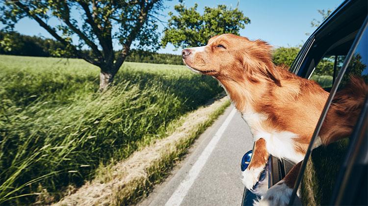 Viaggiare con il cane: una mano arriva da Uber Pet!