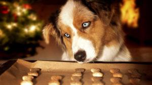 Biscotti per cani: 5 ricette per cani golosi