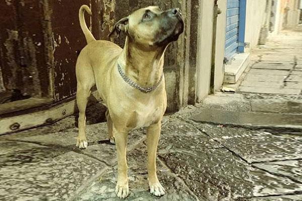 Cane in attesa del suo amore