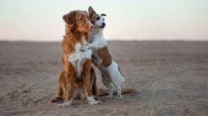 Storie di cani: l'amore secondo loro