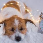 Cani a Capodanno: torna la tortura dei botti