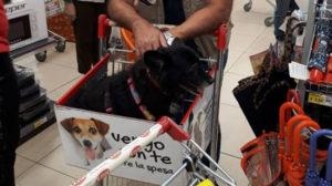 Cani nei locali pubblici: il nuovo disegno di legge
