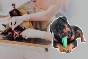 Morsino lo spazzolino per cani