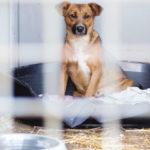 Adotta un cane: a chi rivolgersi