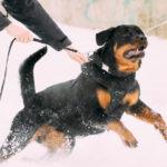 Patentino per cani pericolosi: la novità del 2020