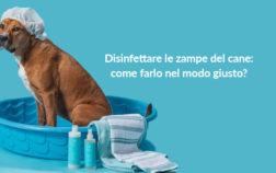 Come Disinfettare le zampe del cane come farlo nel modo giusto