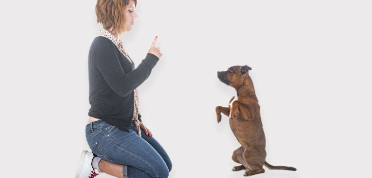 Addestramento di un cucciolo: le tappe fondamentali