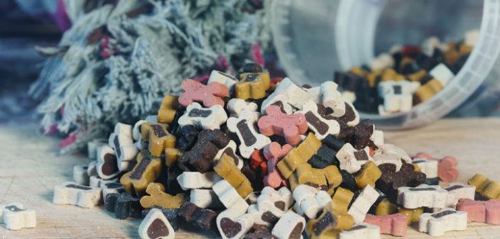 Alimentazione del cane: una guida essenziale