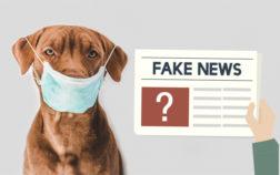 Fake news: anche cani e gatti possono essere contagiati, isolarli dai padroni