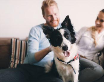 Gli italiani amano i cani e gli animali domestici: i dati del Rapporto Assalco-Zoomark 2019