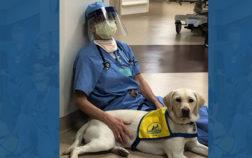 Pet Therapy: l'aiuto degli amici a 4 zampe nella battaglia al Coronavirus