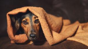 Post quarantena: come evitare l'ansia nel cane