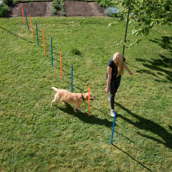 Slalom per cani