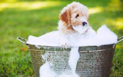 Primo bagnetto al cane: quando farlo?
