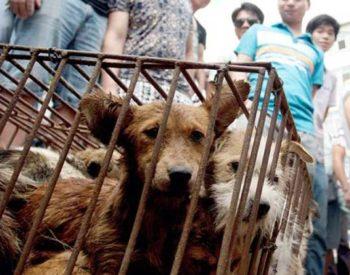 Il tradimento di Yulin