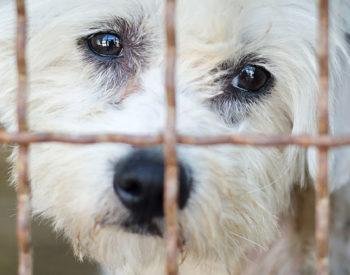 Pelliccia di cane e gatto: la morte addosso