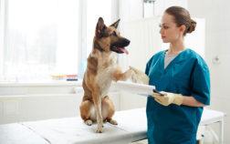 Malattie delle zampe del cane: cause, sintomi e trattamento