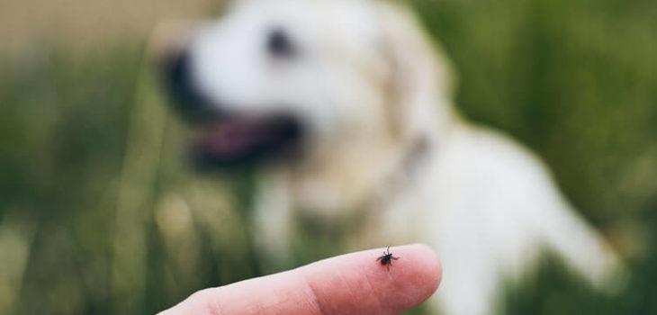 Come togliere una zecca al cane: i consigli di Canidaamare