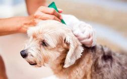 L'importanza degli antiparassitari per cani